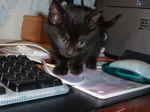 Nala-kitten2